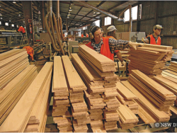 Uratta TIMBER Market